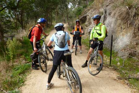 Four cyclists stopped on a trail