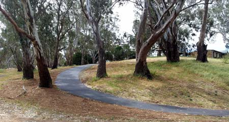 Sealed bike path winding through gum trees