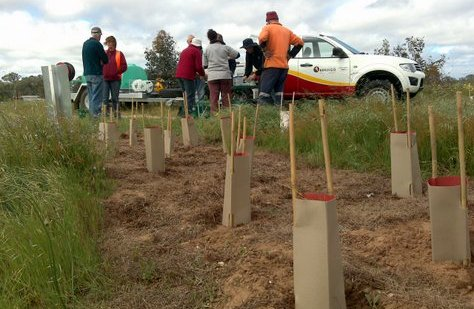 Rail Trail tree planting improves the natural environment