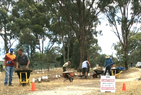 Volunteers planting and mulching on O'Keefe Rail Trail, Junortoun.