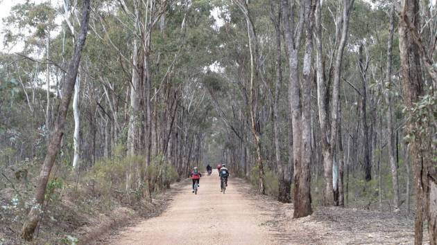 One Eye Forest, Derrinal-Heathcote section, O'Keefe Rail Trail